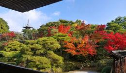 京都のシェアハウス