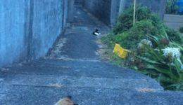 ハウスレポート7|奄美大島の隣の島の加計呂麻島に来てます