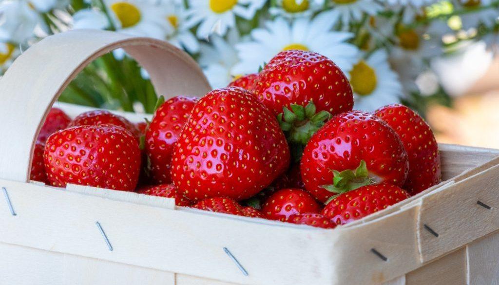 strawberries-4255928_1920